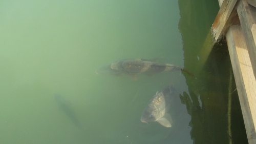 some giant fish in the lakes (which by the way were all full).....